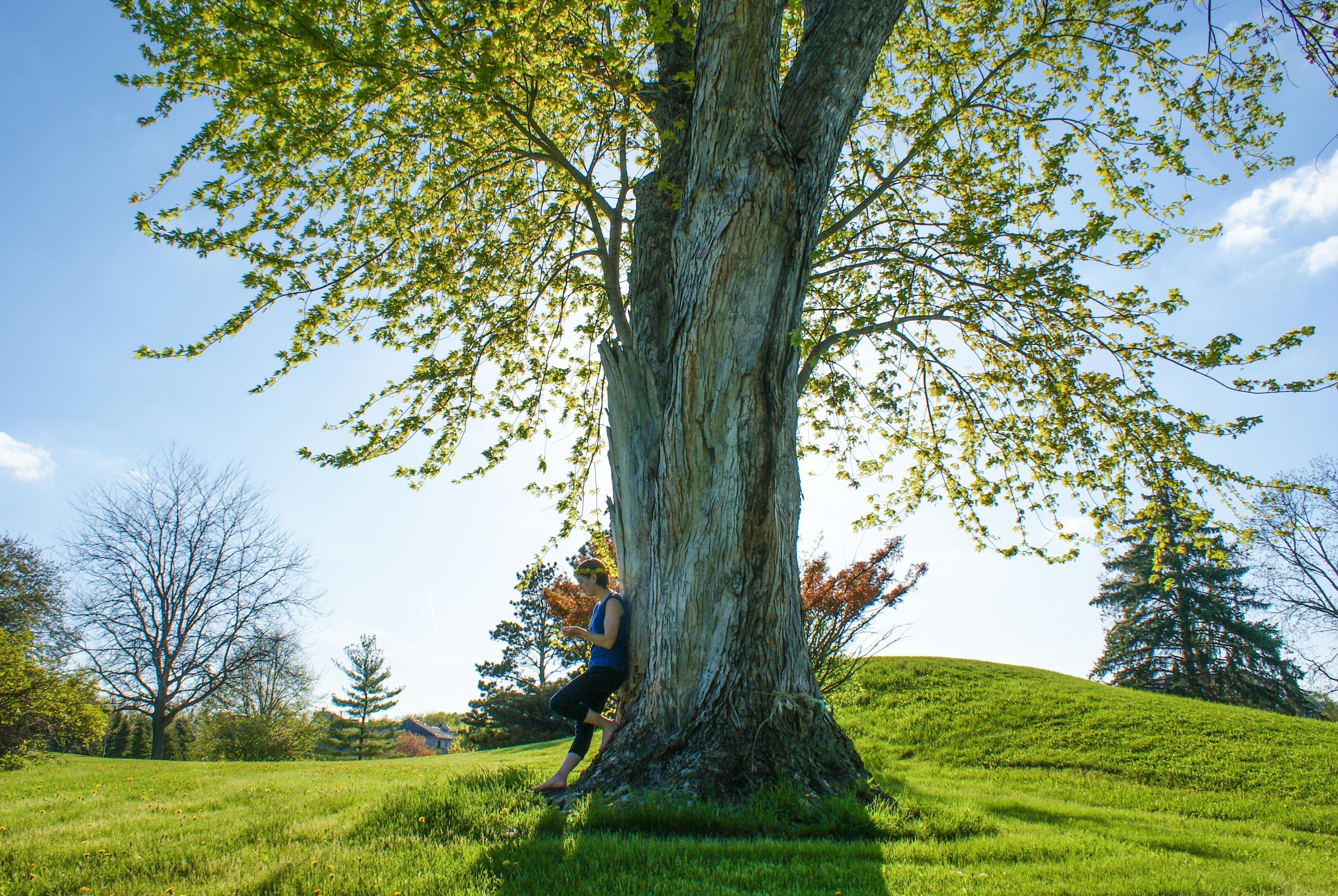 決定木について(学習アルゴリズム-理論編、AzureMLでの評価)